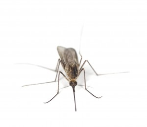 Mosquito treatment and prevention