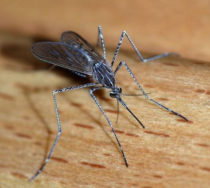 mosquito control, how to get rid of mosquitoes, mosquito repellent