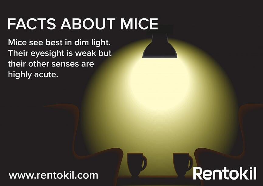 Mice rely on other senses like ultrasound frequencies to navigate dark areas
