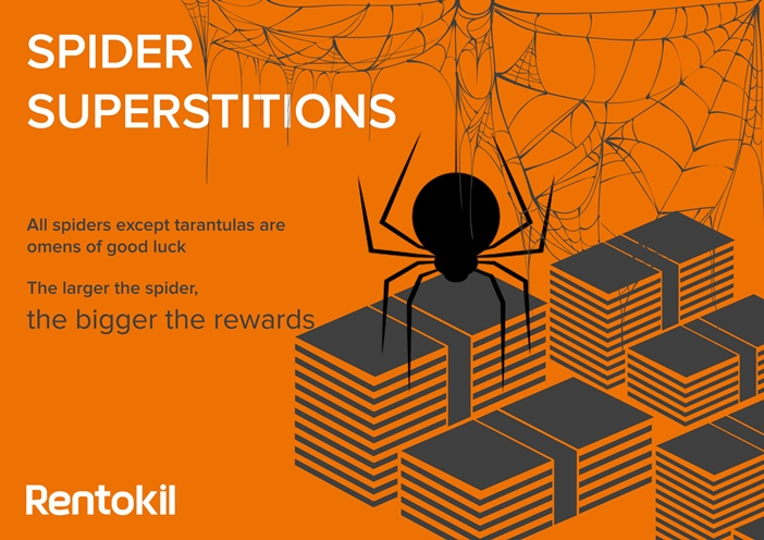 Finding a spider in your home could mean could signify good fortune ahead, and specifically money!