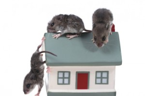 Rats reciprocate acts of genorosity