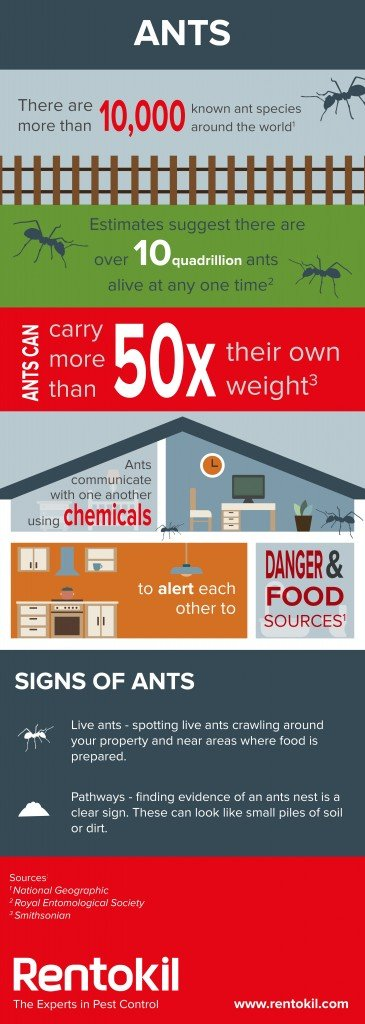 View our infographic for more facts about ants