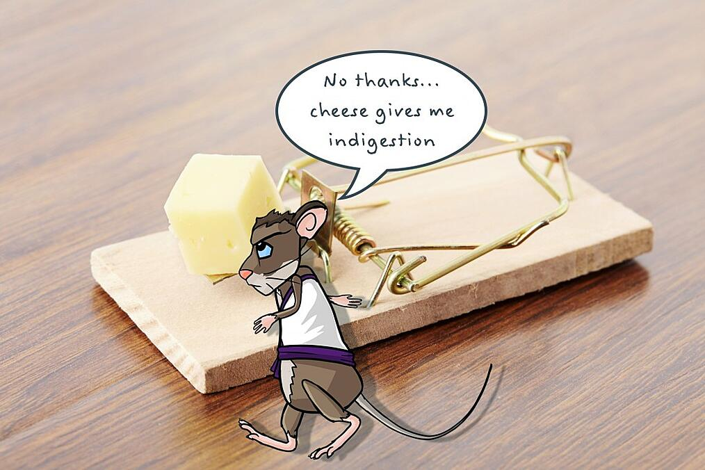 Do mice like cheese? Find out from the Rentokil Pest Control Experts in South Africa