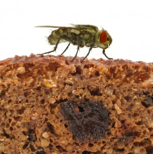 Flies land on all sorts of unhygienic areas before landing on your food!