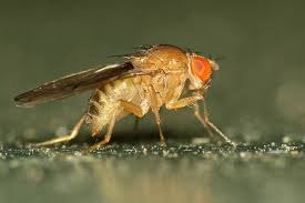 prevent_fruit_flies