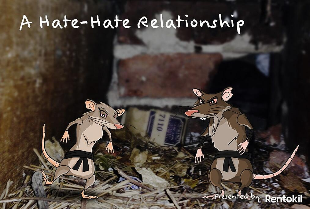Rats and mice cause damage