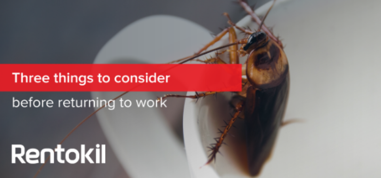 Rentokil South Africa - what to consider when getting rid of pests after covid-19 lockdown