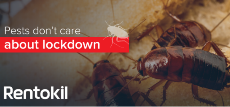 Rentokil South Africa, what pest risks can you find in an empty building? Pests during covid-19 lockdown