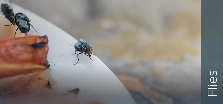 Flies are the 4th biggest pest risk to empty buildings - tips on pest control and empty buildings