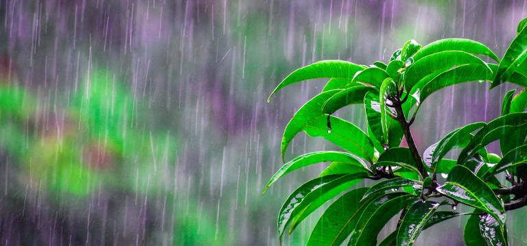 Summer rains in Johannesburg and the pests that come after the rain - find out how to control summer pests from the experts at Rentokil Pest Control South Africa