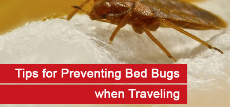 Bed bugs are making a comeback: Reasons why there is a bed bug epdemic