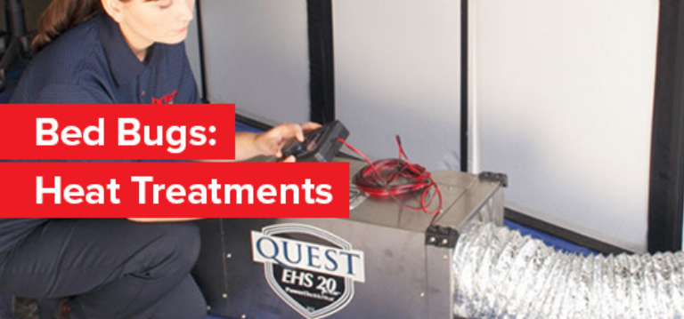 Find out more information about how to remove bed bugs using our Entotherm treatment.