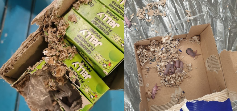 Rodent nesting in food packaging boxes - stop rat and mice infestations by learning how to spot infestation signs
